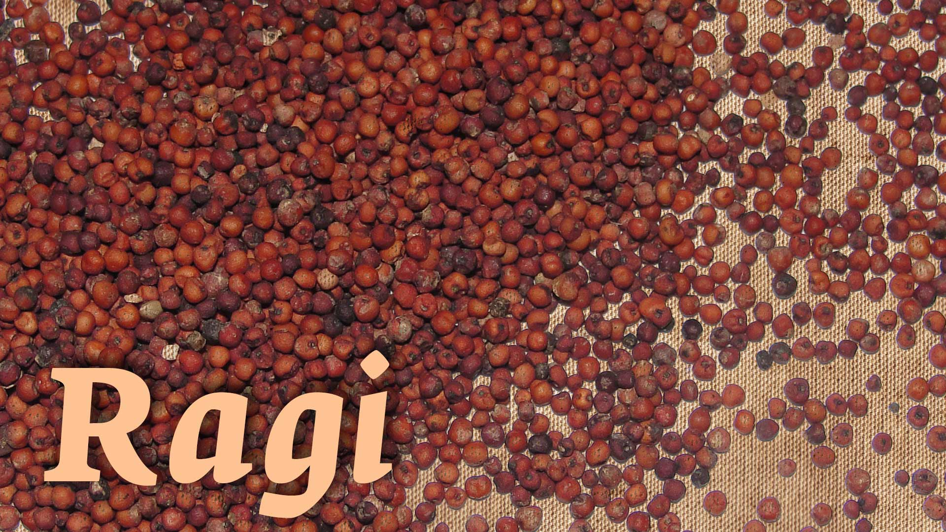 Healthy benefits of eating Ragi on a daily basis