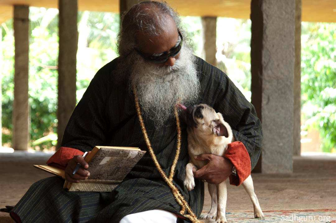 Sadhguru S Relationships With Denizens Of The Natural World