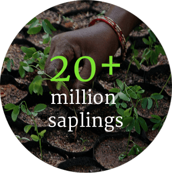 circlesF_0002_20+-million--saplings