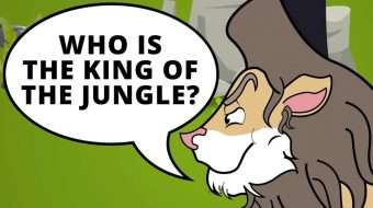 The Real King of the Jungle