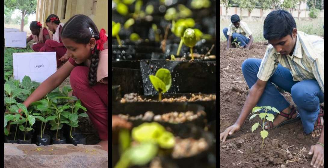 Project GreenHands: The People Behind 30 Million Saplings